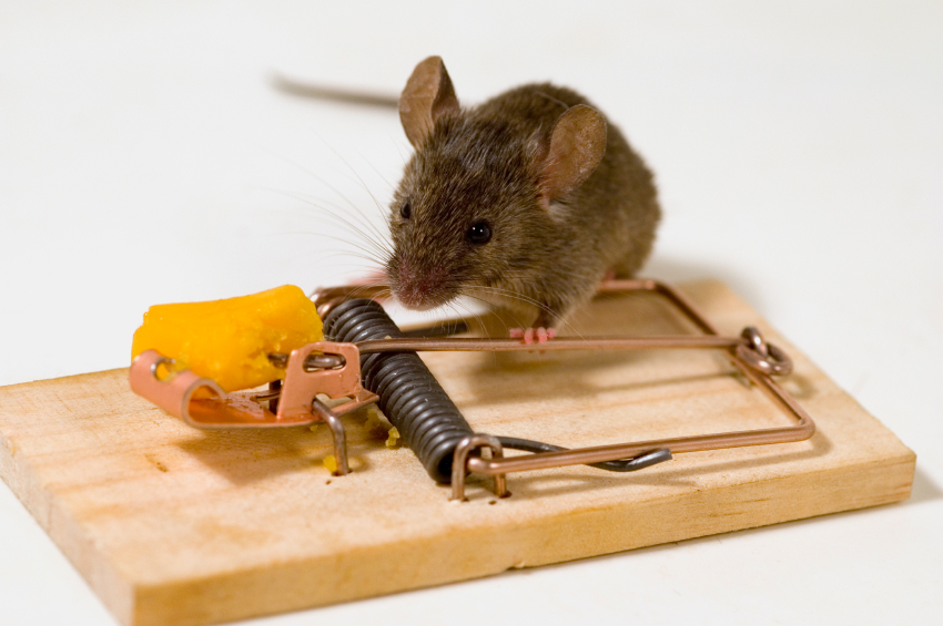 Лучший способ борьбы с мышами
