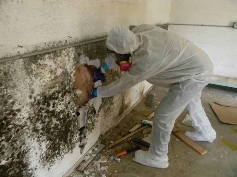 Плесень на обоях на стенах: как избавиться в домашних условиях