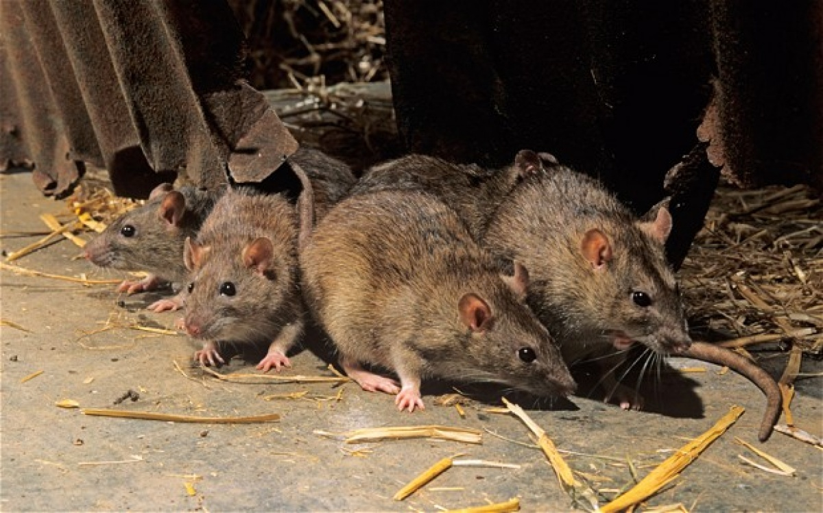 Какой ультразвуковой отпугиватель крыс и мышей лучше: рейтинг 2019 года