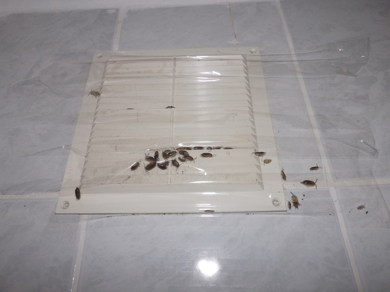 У соседей тараканы куда жаловаться