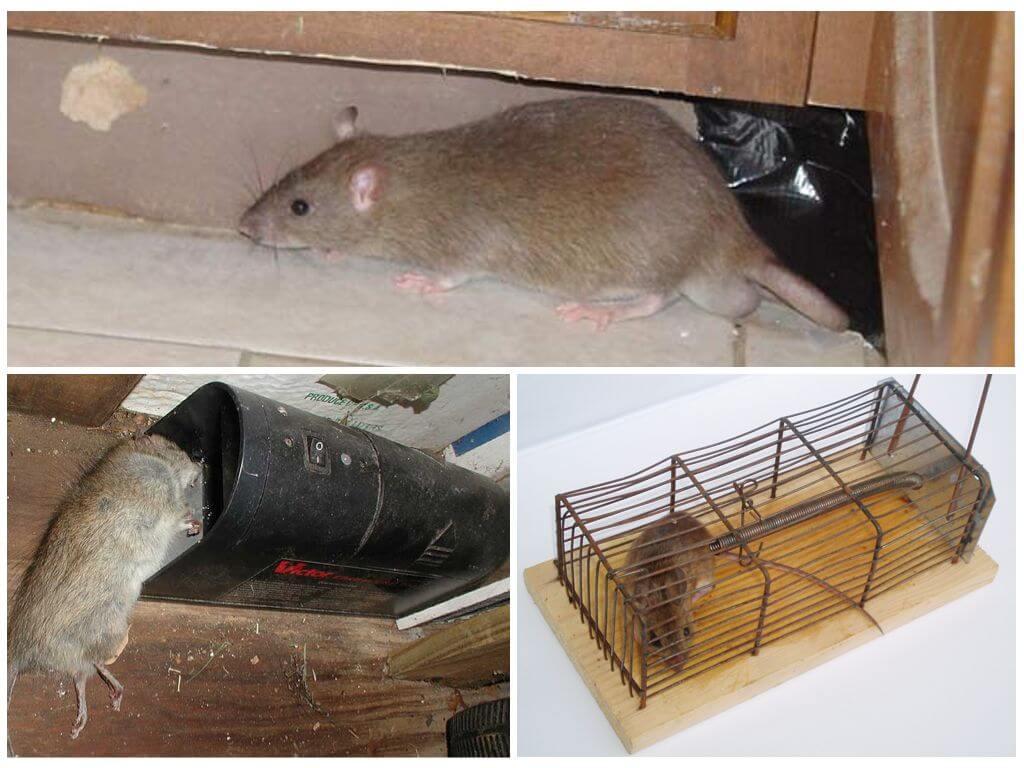 Ящики для мышей