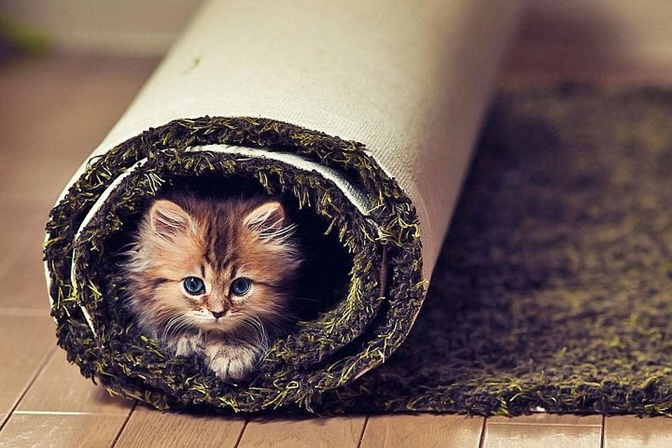 Котенок в ковре