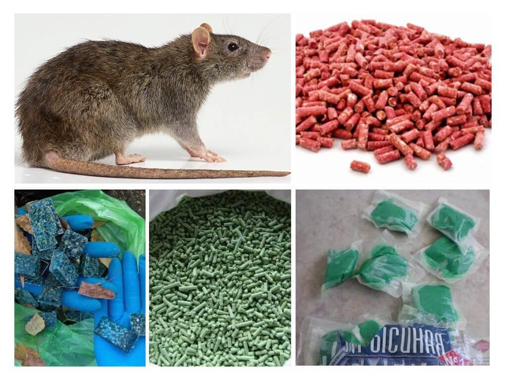 Яды для крыс