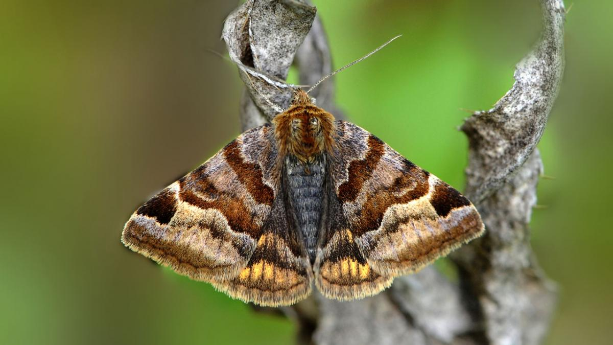 Бабочка на ветке
