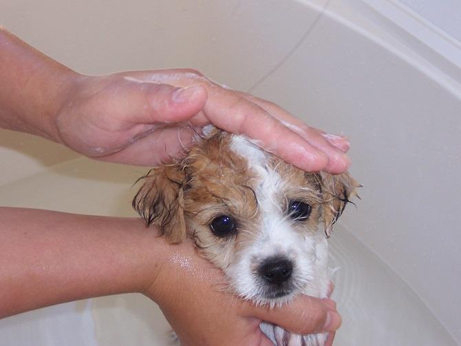 Мытье щенка